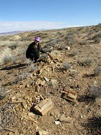 petrified wood collecting